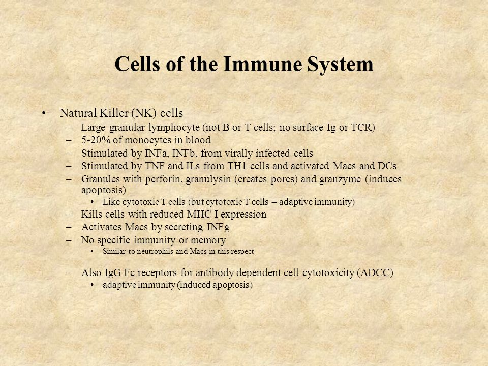 Cells of the Immune System Natural Killer (NK) cells –Large granular lymphocyte (not B or T cells; no surface Ig or TCR) –5-20% of monocytes in blood