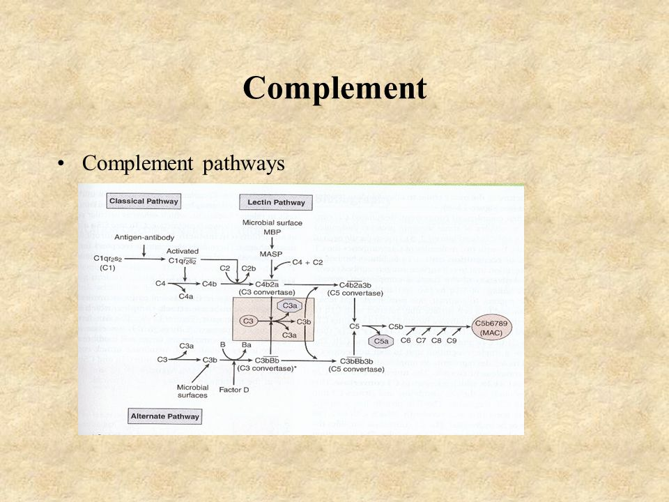 Complement Complement pathways