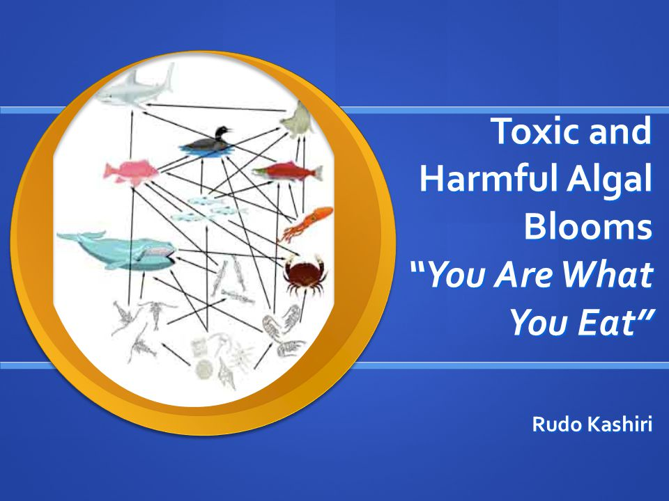 Toxic and Harmful Algal Blooms You Are What You Eat Rudo Kashiri