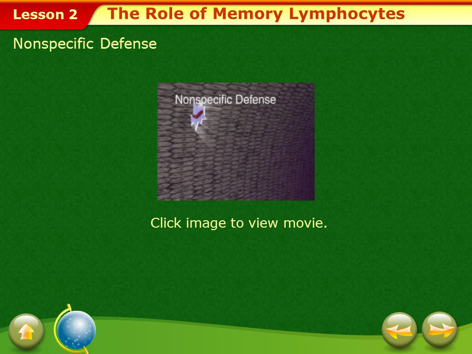 Lesson 2 Memory Cells Some T cells and B cells that have been activated by antigens become memory cells.