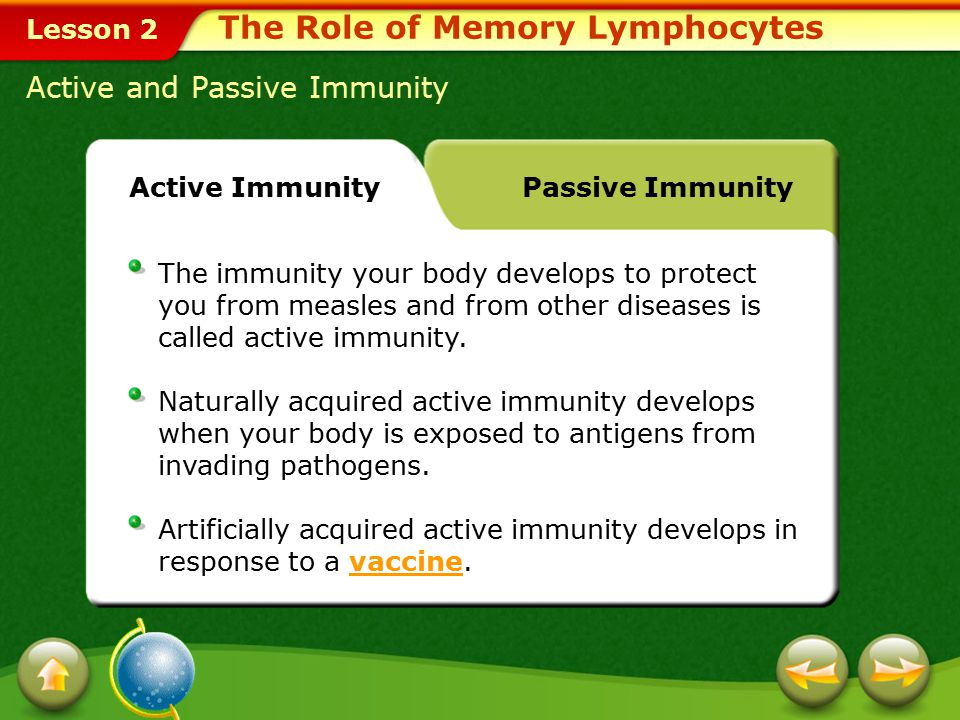 Lesson 2 Nonspecific Defense The Role of Memory Lymphocytes Click image to view movie.