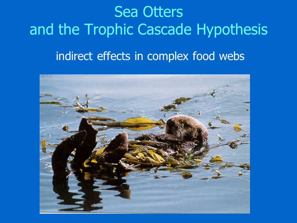 Sea Otters and the Trophic Cascade Hypothesis indirect effects in complex food webs