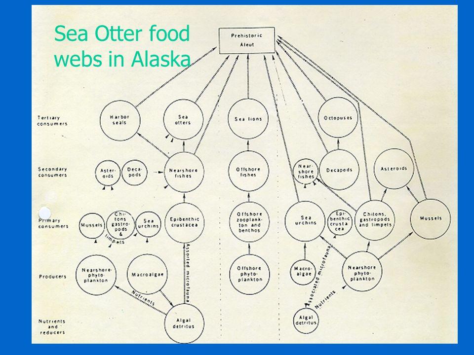 Sea Otter food webs in Alaska