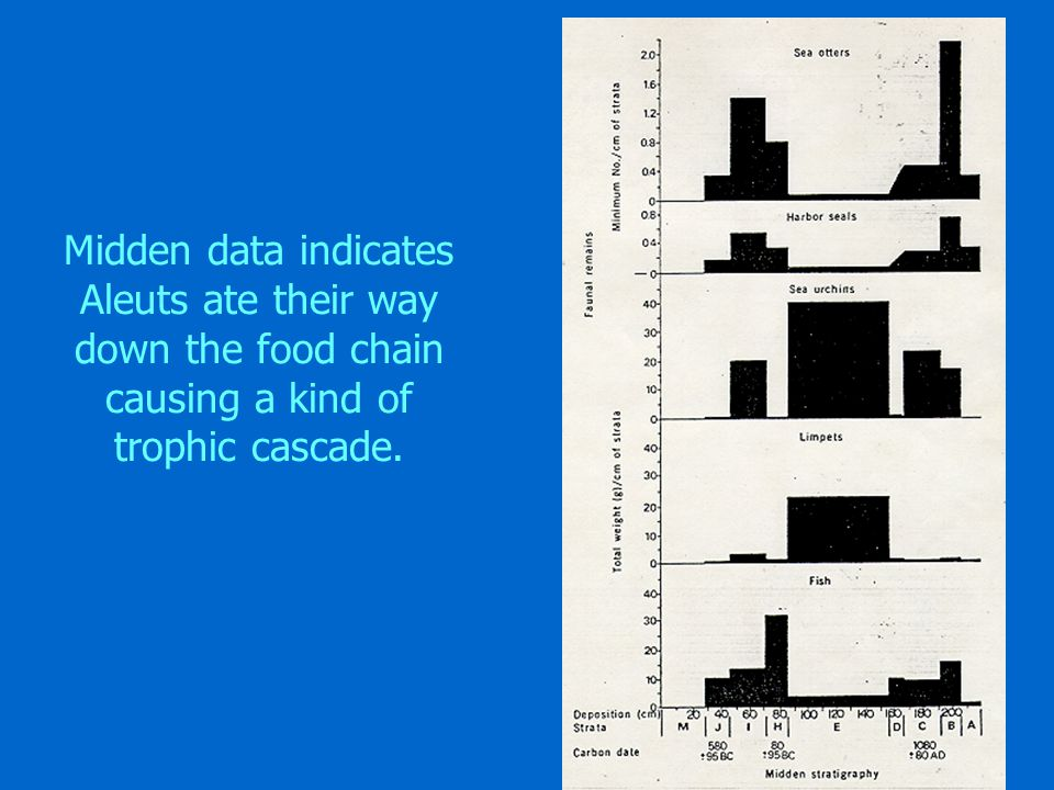 Midden data indicates Aleuts ate their way down the food chain causing a kind of trophic cascade.