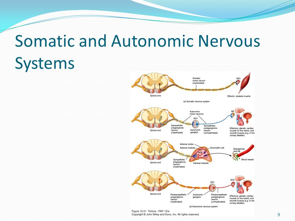 Somatic and Autonomic Nervous Systems 9