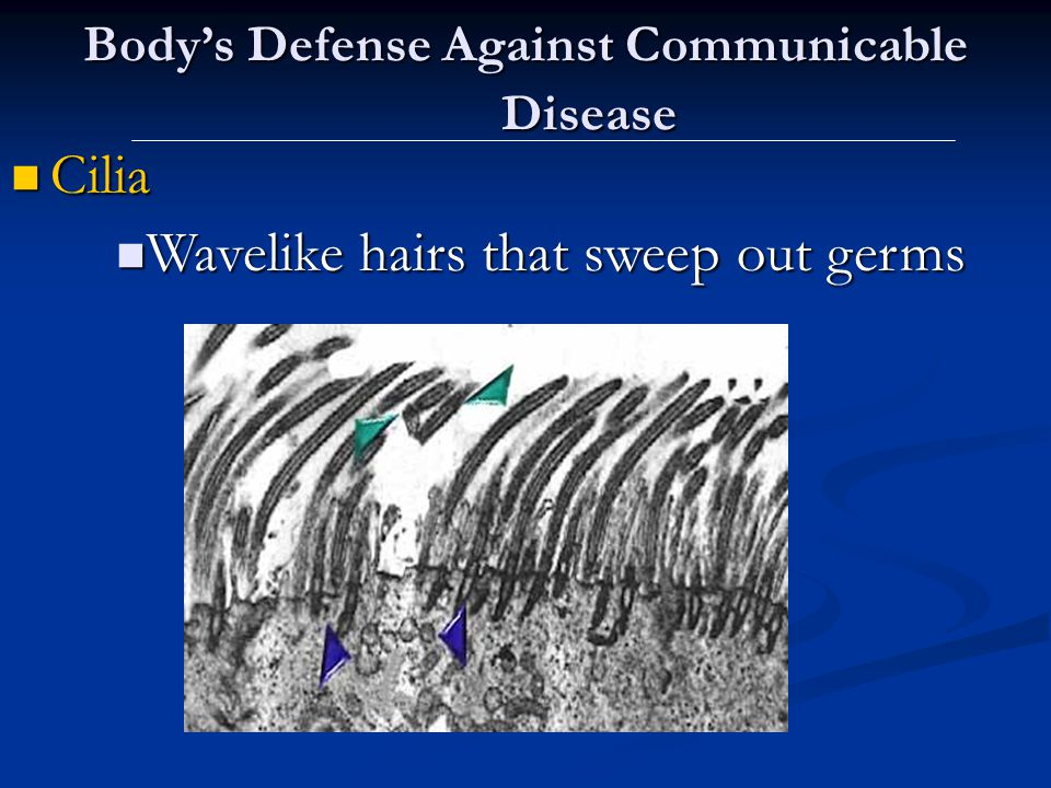 Body's Defense Against Communicable Disease Cilia Cilia Wavelike hairs that sweep out germs Wavelike hairs that sweep out germs