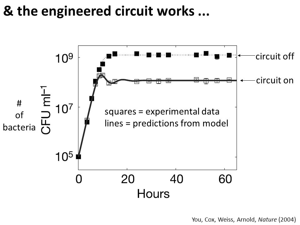 # of bacteria circuit off circuit on & the engineered circuit works... squares = experimental data lines = predictions from model You, Cox, Weiss, Arn
