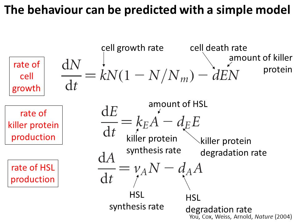 The behaviour can be predicted with a simple model rate of cell growth cell growth ratecell death rate amount of killer protein rate of killer protein