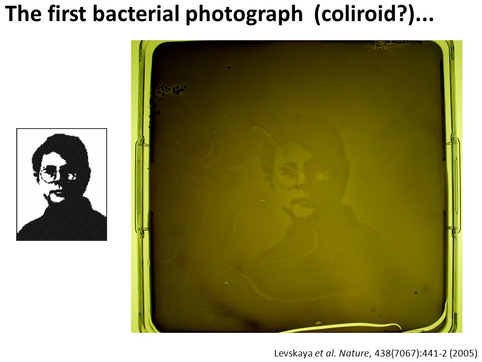 The first bacterial photograph (coliroid )...