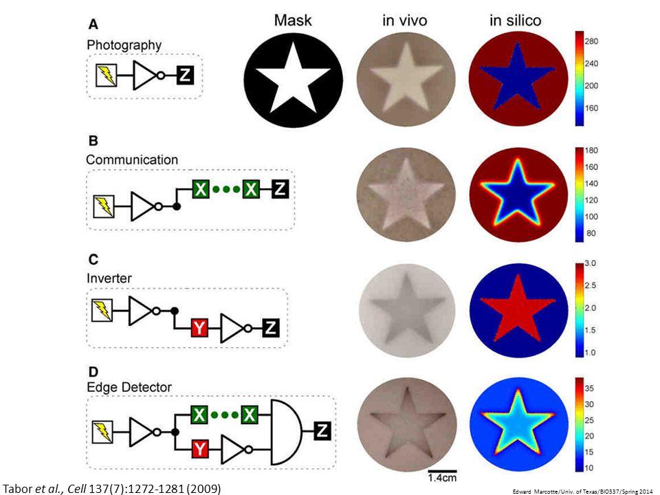 Tabor et al., Cell 137(7):1272-1281 (2009) Edward Marcotte/Univ. of Texas/BIO337/Spring 2014