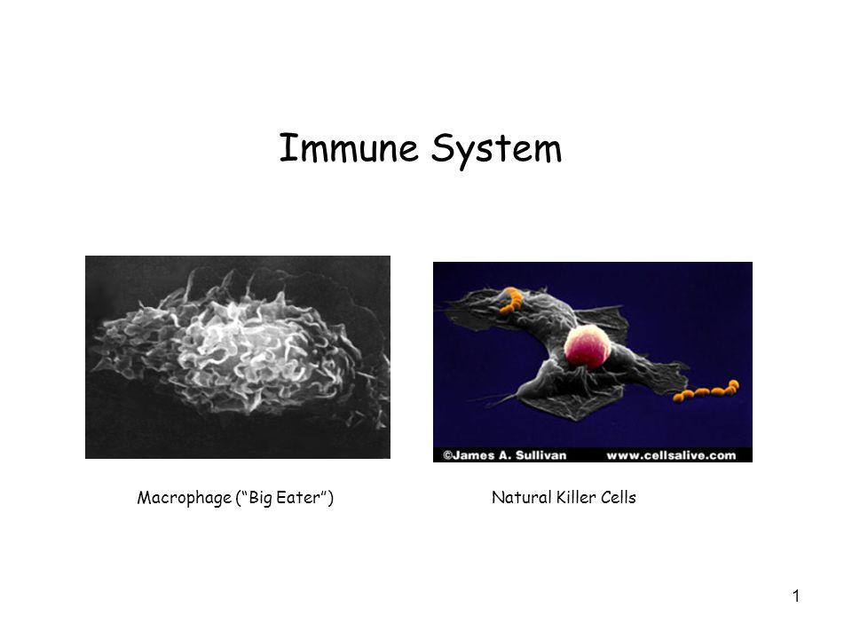 """Immune System Macrophage (""""Big Eater"""")Natural Killer Cells 1"""