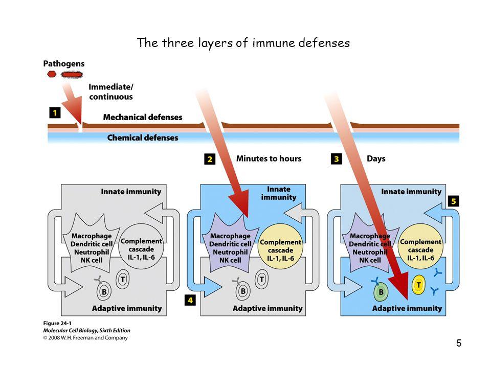 The three layers of immune defenses 5