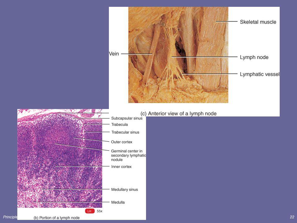 Principles of Human Anatomy and Physiology, 11e22
