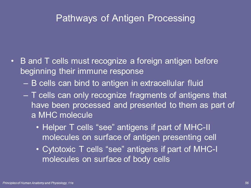 Principles of Human Anatomy and Physiology, 11e56 Pathways of Antigen Processing B and T cells must recognize a foreign antigen before beginning their