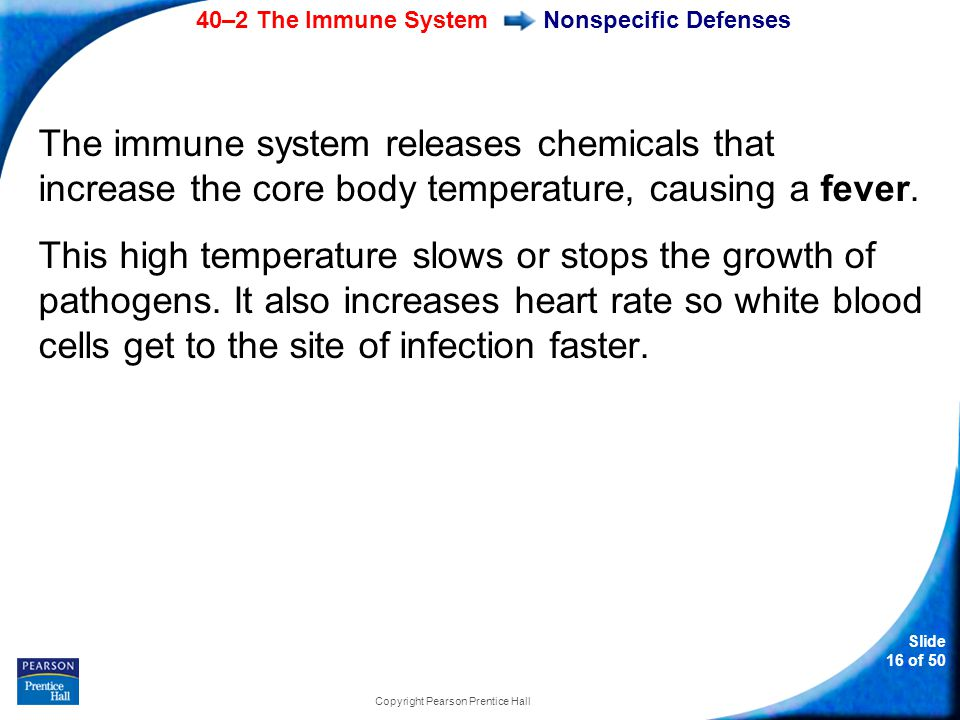 40–2 The Immune System Slide 16 of 50 Copyright Pearson Prentice Hall Nonspecific Defenses The immune system releases chemicals that increase the core