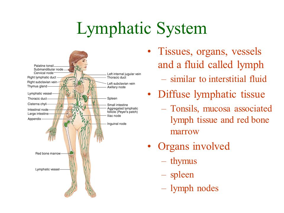 Functions of the Lymphatic System Draining excess interstitial fluid & plasma proteins from tissue spaces Transport of some nutrients and hormones Immunity –specific defense –recognize microbes or abnormal cells & respond by killing them directly or secreting antibodies that cause their destruction