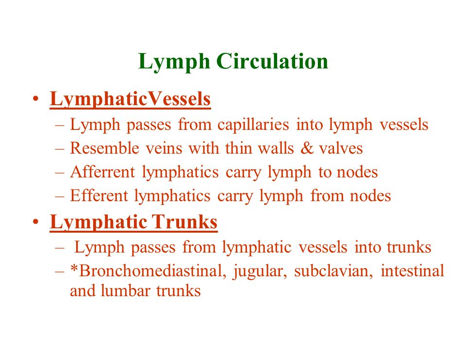Lymph Circulation Lymphatic ducts –Two ducts drain lymph from lymphatic trunks into the subclavian veins –Thoracic Duct: Larger one that drains most of body lymph into the left subclavian vein –Right Lymphatic Duct: Smaller one that drains right side of head, right shoulder and right arm into the right subclavian vein