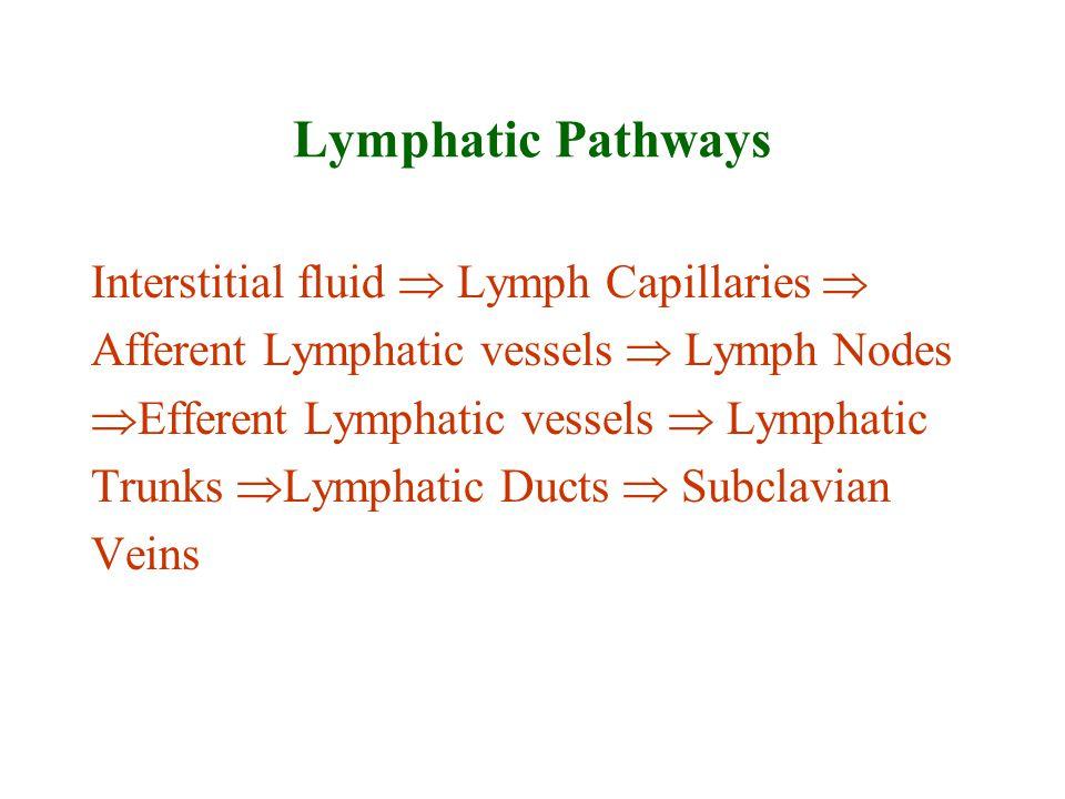 Lymphatic Pathways Interstitial fluid  Lymph Capillaries  Afferent Lymphatic vessels  Lymph Nodes  Efferent Lymphatic vessels  Lymphatic Trunks 