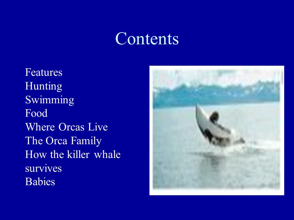Contents Features Hunting Swimming Food Where Orcas Live The Orca Family How the killer whale survives Babies