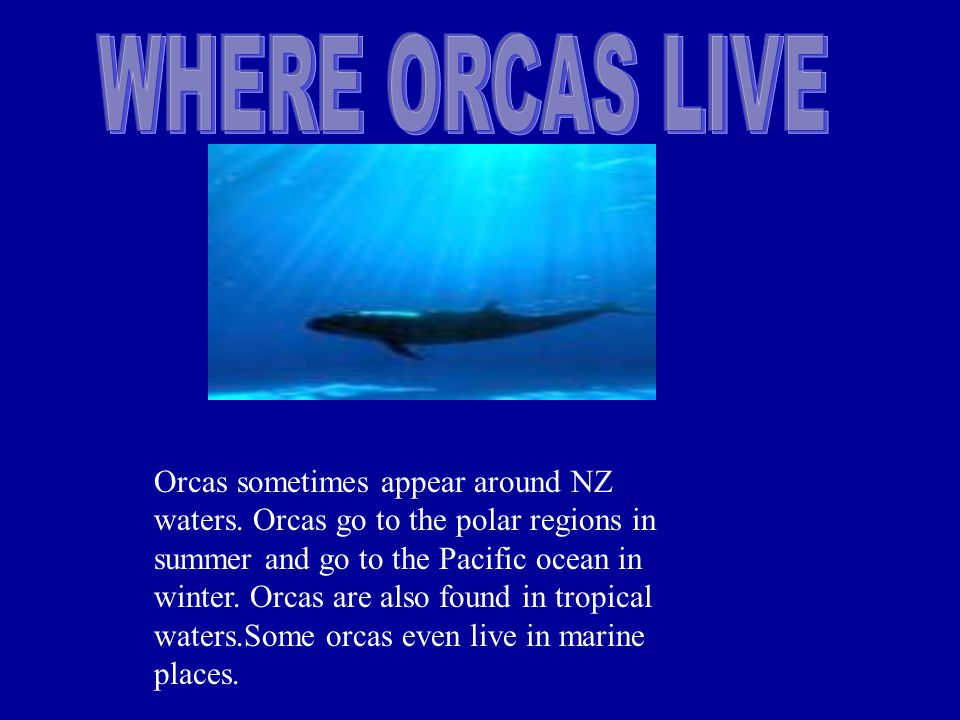 Orcas sometimes appear around NZ waters. Orcas go to the polar regions in summer and go to the Pacific ocean in winter. Orcas are also found in tropic
