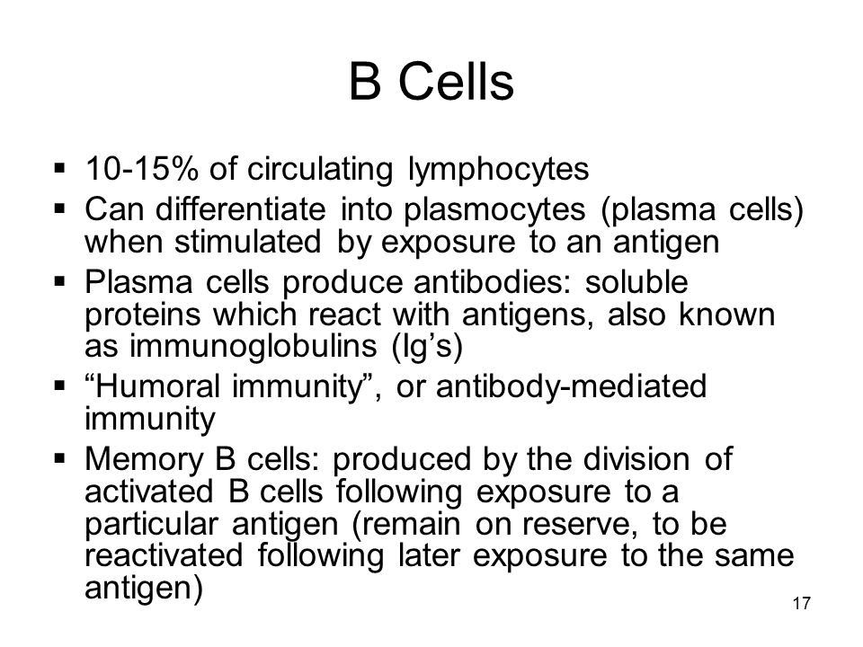 17 B Cells  10-15% of circulating lymphocytes  Can differentiate into plasmocytes (plasma cells) when stimulated by exposure to an antigen  Plasma cells produce antibodies: soluble proteins which react with antigens, also known as immunoglobulins (Ig's)  Humoral immunity , or antibody-mediated immunity  Memory B cells: produced by the division of activated B cells following exposure to a particular antigen (remain on reserve, to be reactivated following later exposure to the same antigen)