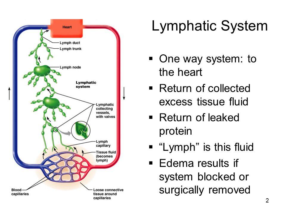 43 lymphangiogram
