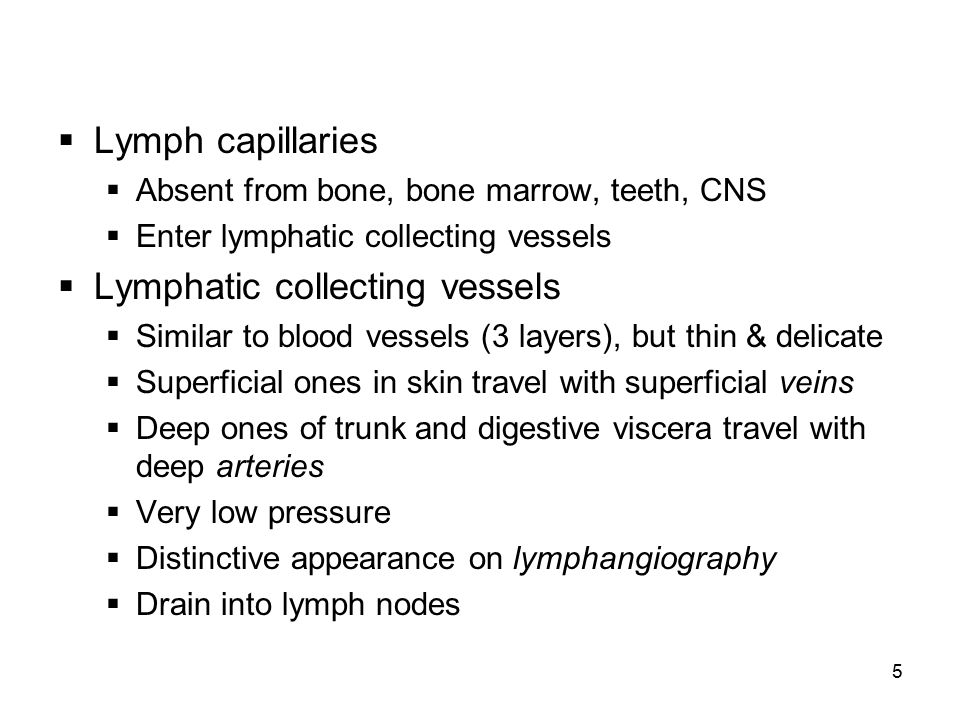 6  Lymph nodes: bean shaped organs along lymphatic collecting vessels  Up to 1 inch in size  Clusters of both deep and superficial LNs