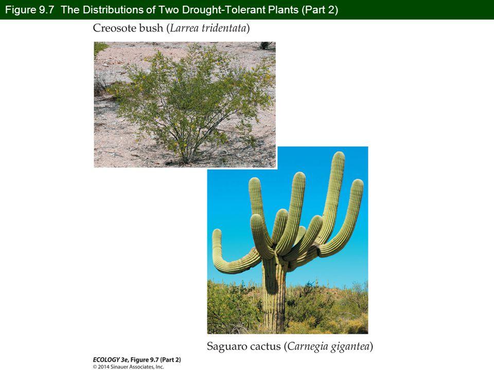 Figure 9.7 The Distributions of Two Drought-Tolerant Plants (Part 2)