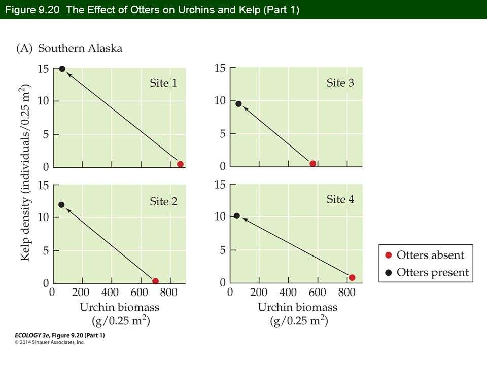 Figure 9.20 The Effect of Otters on Urchins and Kelp (Part 1)