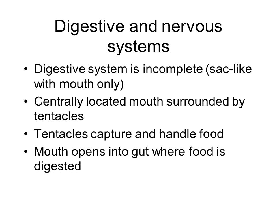 Digestive and nervous systems Digestive system is incomplete (sac-like with mouth only) Centrally located mouth surrounded by tentacles Tentacles capture and handle food Mouth opens into gut where food is digested