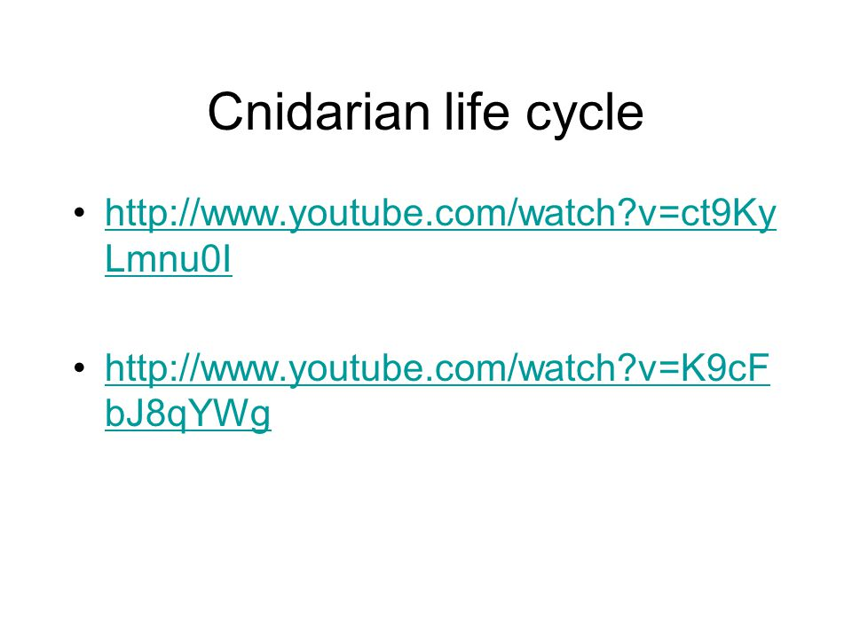 Cnidarian life cycle http://www.youtube.com/watch v=ct9Ky Lmnu0Ihttp://www.youtube.com/watch v=ct9Ky Lmnu0I http://www.youtube.com/watch v=K9cF bJ8qYWghttp://www.youtube.com/watch v=K9cF bJ8qYWg
