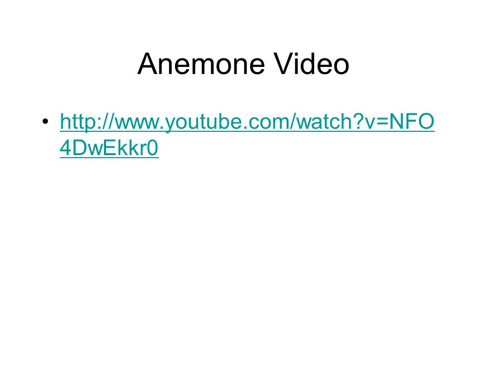 Anemone Video http://www.youtube.com/watch v=NFO 4DwEkkr0http://www.youtube.com/watch v=NFO 4DwEkkr0