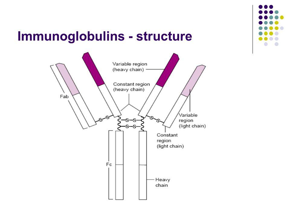 Immunoglobulins - structure
