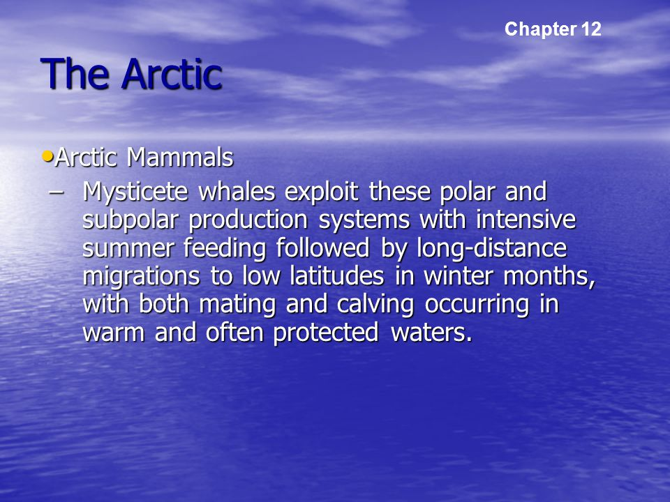 The Arctic Arctic Mammals Arctic Mammals –Mysticete whales exploit these polar and subpolar production systems with intensive summer feeding followed by long-distance migrations to low latitudes in winter months, with both mating and calving occurring in warm and often protected waters.