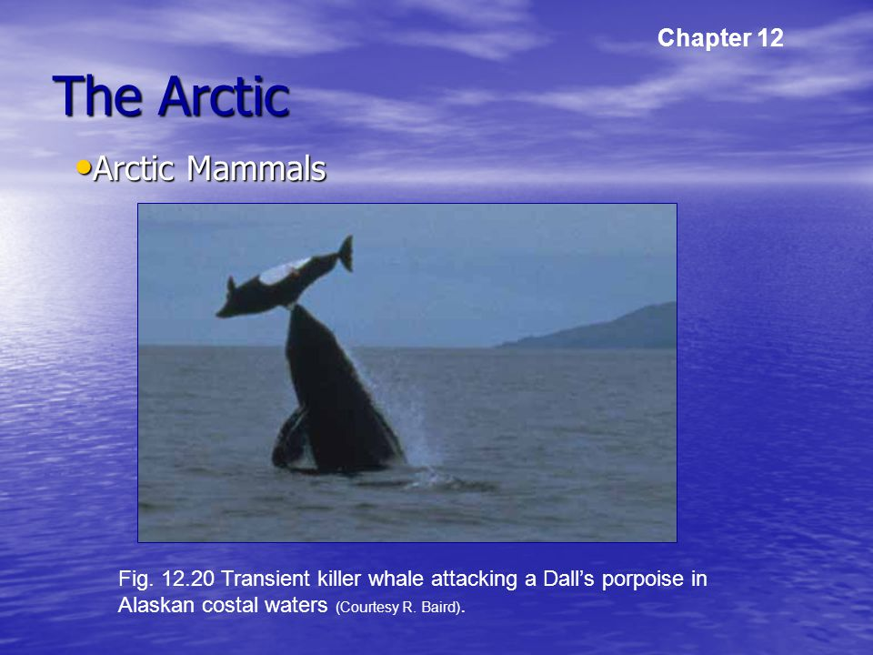 The Arctic Arctic Mammals Arctic Mammals Chapter 12 Fig.