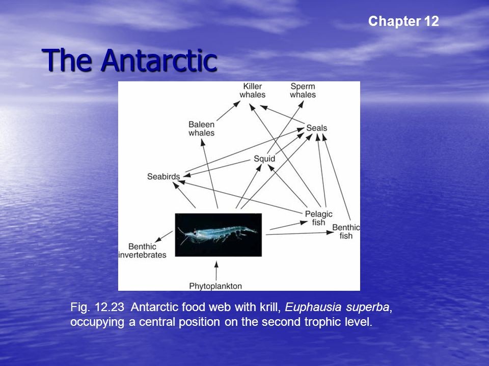 The Antarctic Chapter 12 Fig.