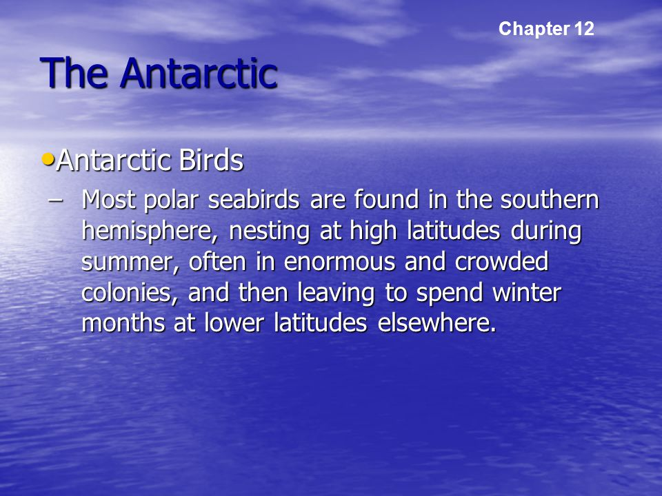 The Antarctic Antarctic Birds Antarctic Birds –Most polar seabirds are found in the southern hemisphere, nesting at high latitudes during summer, often in enormous and crowded colonies, and then leaving to spend winter months at lower latitudes elsewhere.