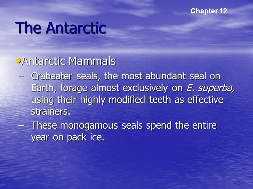 The Antarctic Antarctic Mammals Antarctic Mammals –Crabeater seals, the most abundant seal on Earth, forage almost exclusively on E.