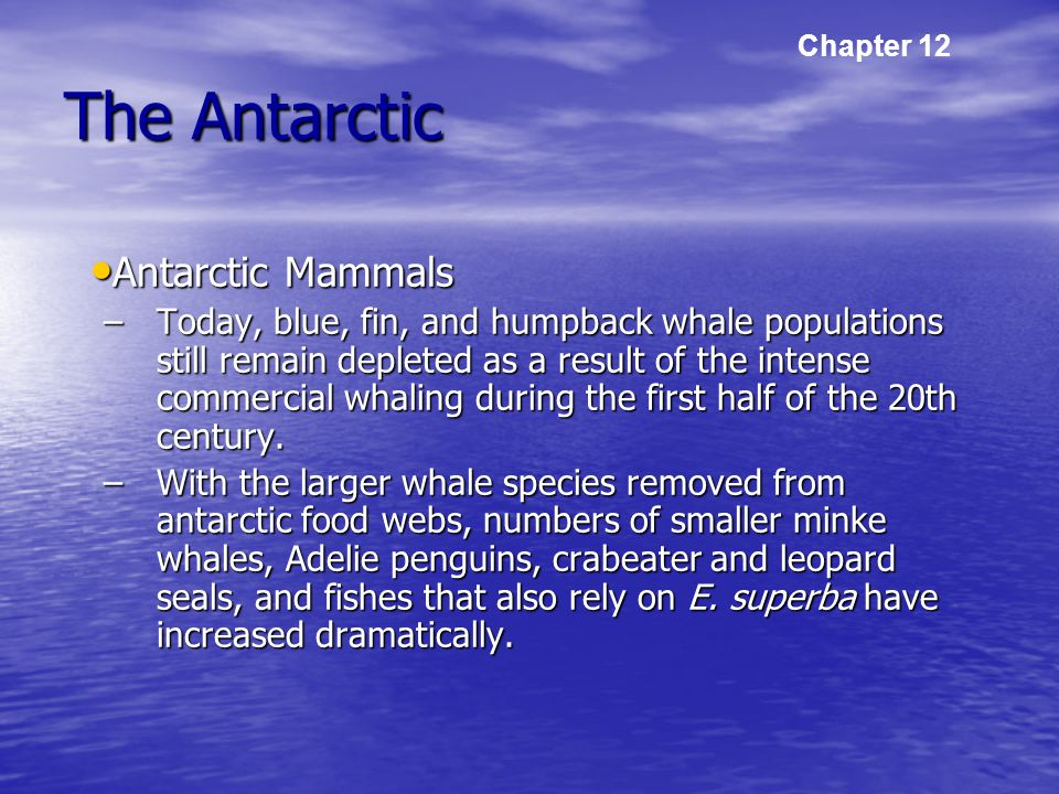 The Antarctic Antarctic Mammals Antarctic Mammals –Today, blue, fin, and humpback whale populations still remain depleted as a result of the intense commercial whaling during the first half of the 20th century.