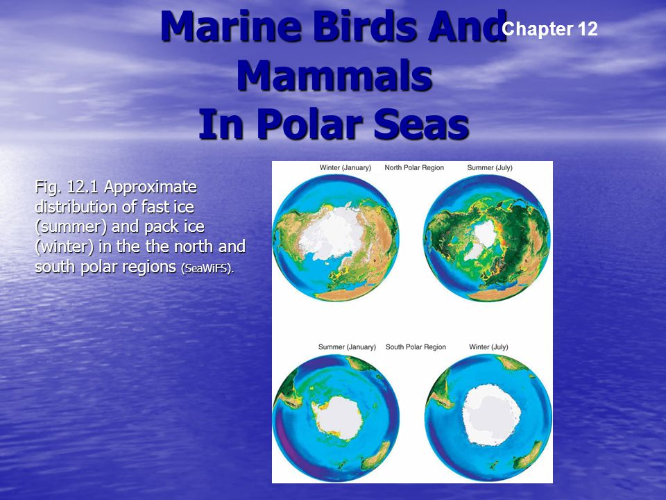 Marine Birds And Mammals In Polar Seas Fig.