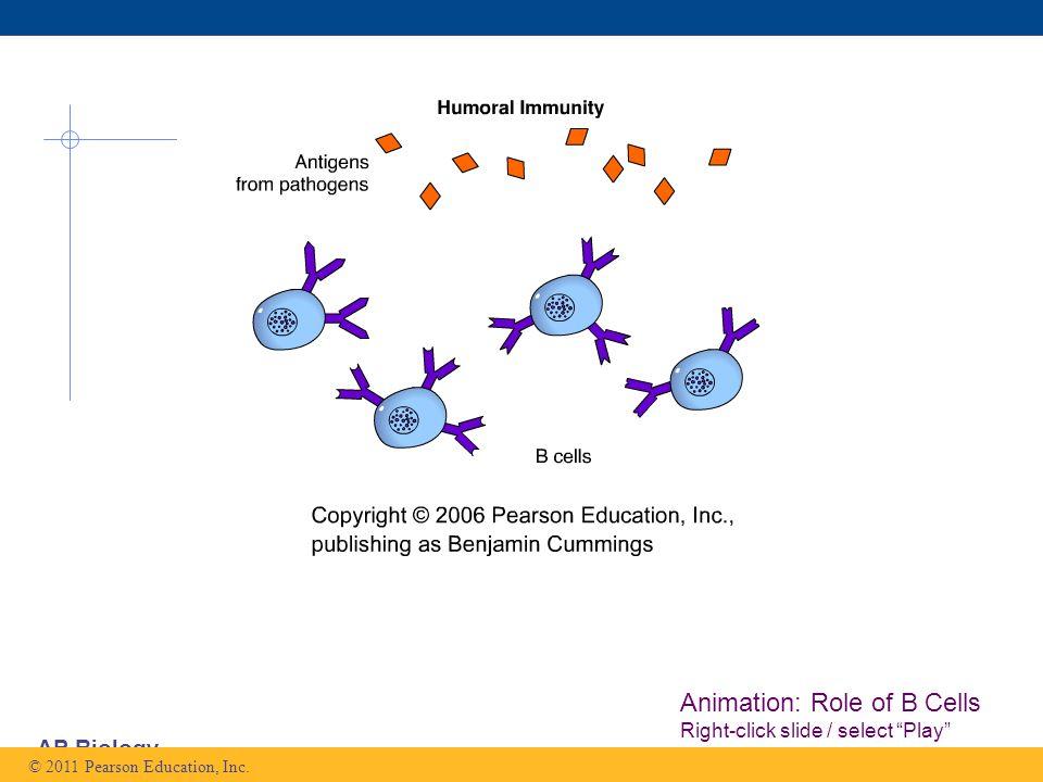 AP Biology Figure 43.12 Displayed antigen fragment MHC molecule Antigen fragment Pathogen Host cell T cell T cell antigen receptor (a) Antigen recogni