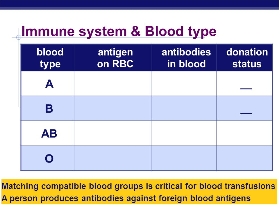 AP Biology Immune system & Blood type blood type antigen on RBC antibodies in blood donation status A type A antigens on surface of RBC anti-B antibodies __ B type B antigens on surface of RBC anti-A antibodies __ AB both type A & type B antigens on surface of RBC no antibodies universal recipient O no antigens on surface of RBC anti-A & anti-B antibodies universal donor Matching compatible blood groups is critical for blood transfusions A person produces antibodies against foreign blood antigens