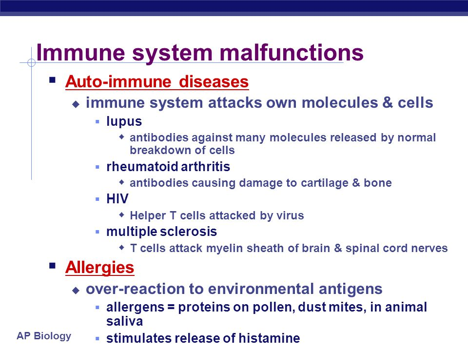 AP Biology Immune system malfunctions  Auto-immune diseases  immune system attacks own molecules & cells  lupus  antibodies against many molecules released by normal breakdown of cells  rheumatoid arthritis  antibodies causing damage to cartilage & bone  HIV  Helper T cells attacked by virus  multiple sclerosis  T cells attack myelin sheath of brain & spinal cord nerves  Allergies  over-reaction to environmental antigens  allergens = proteins on pollen, dust mites, in animal saliva  stimulates release of histamine