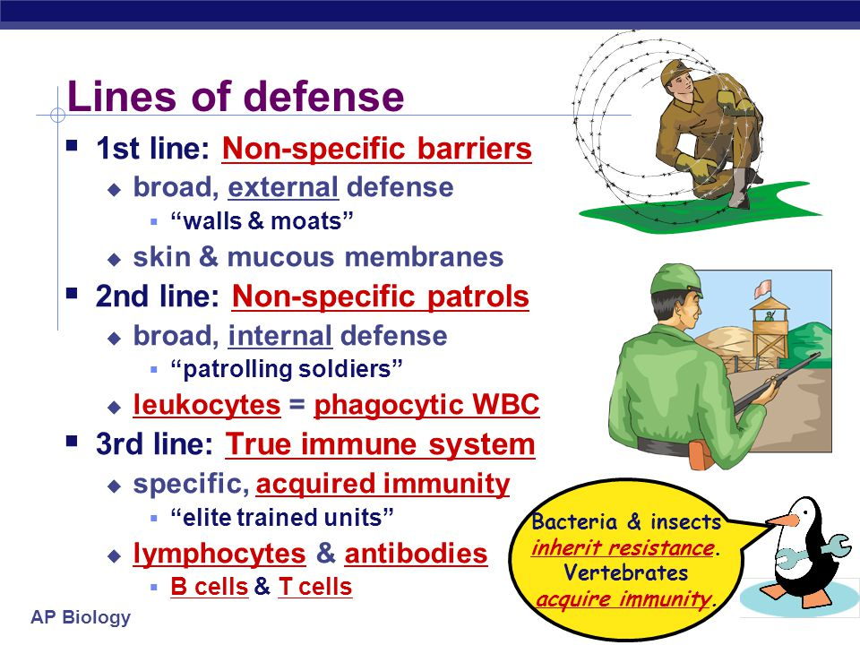 AP Biology Lines of defense  1st line: Non-specific barriers  broad, external defense  walls & moats  skin & mucous membranes  2nd line: Non-specific patrols  broad, internal defense  patrolling soldiers  leukocytes = phagocytic WBC  3rd line: True immune system  specific, acquired immunity  elite trained units  lymphocytes & antibodies  B cells & T cells Bacteria & insects inherit resistance.