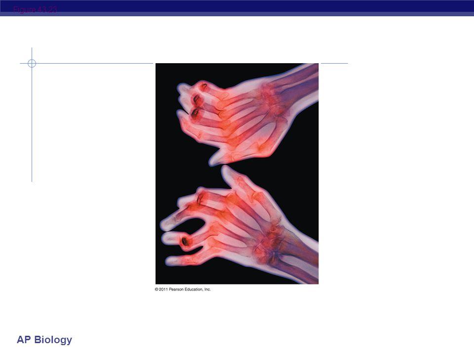 AP Biology Figure 43.22 IgE Allergen Histamine Granule Mast cell