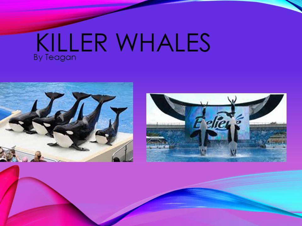 KILLER WHALES By Teagan