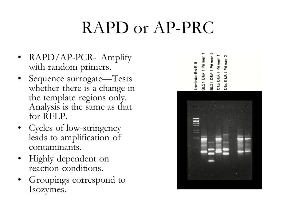 RAPD or AP-PRC RAPD/AP-PCR- Amplify with random primers.