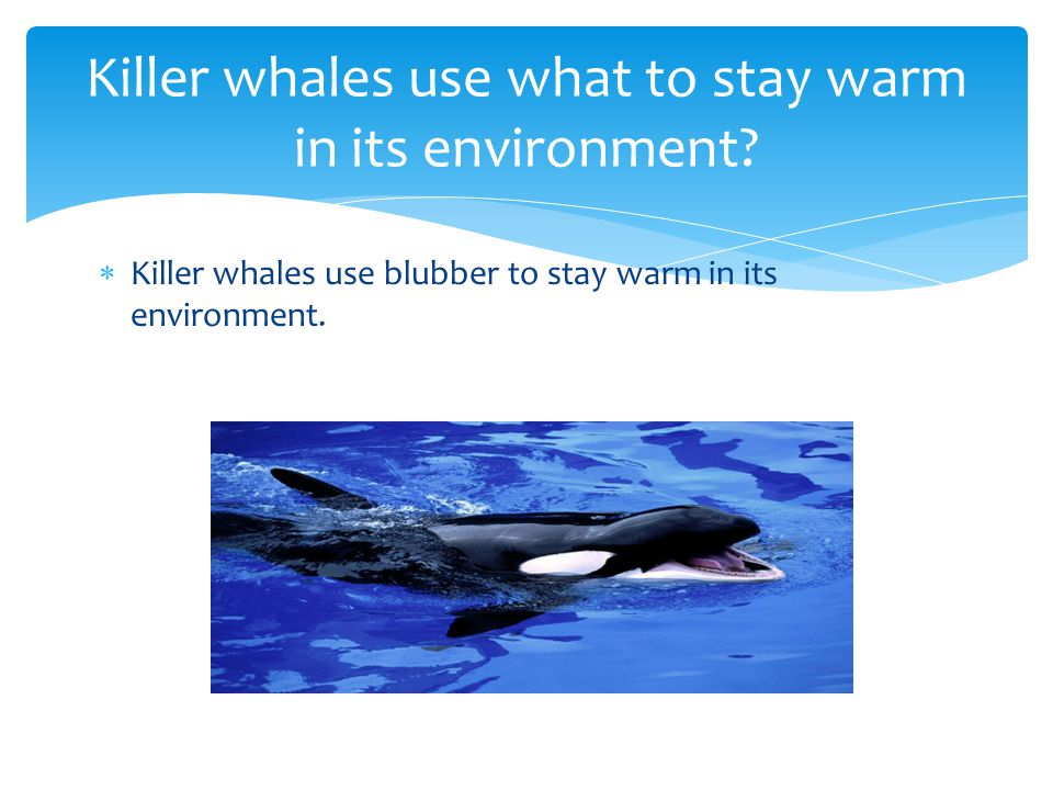 Killer whales use vibrations to protect them self. Killer whales use what to protect them self