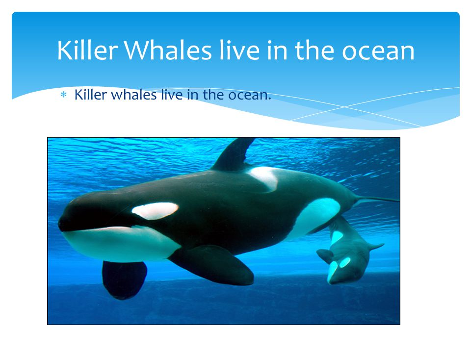 Killer whales are black and white. Killer whales are