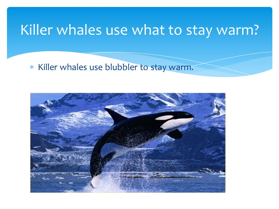 Killer whales eat Keller whales eat fish.